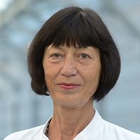 كارين روتي